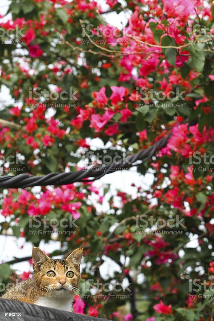 Cat frente de flores foto de stock libre de derechos