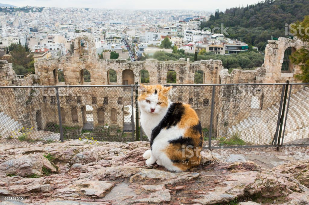 Cat in front Of Odeon of Herodes Atticus, theatre in Acropolis stock photo