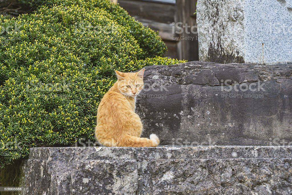 Cat in front of the temple gate stock photo