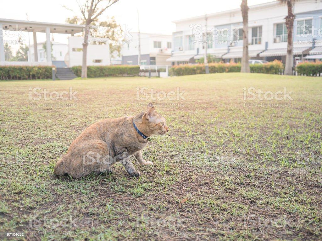 Cat in garden in village. royalty-free stock photo
