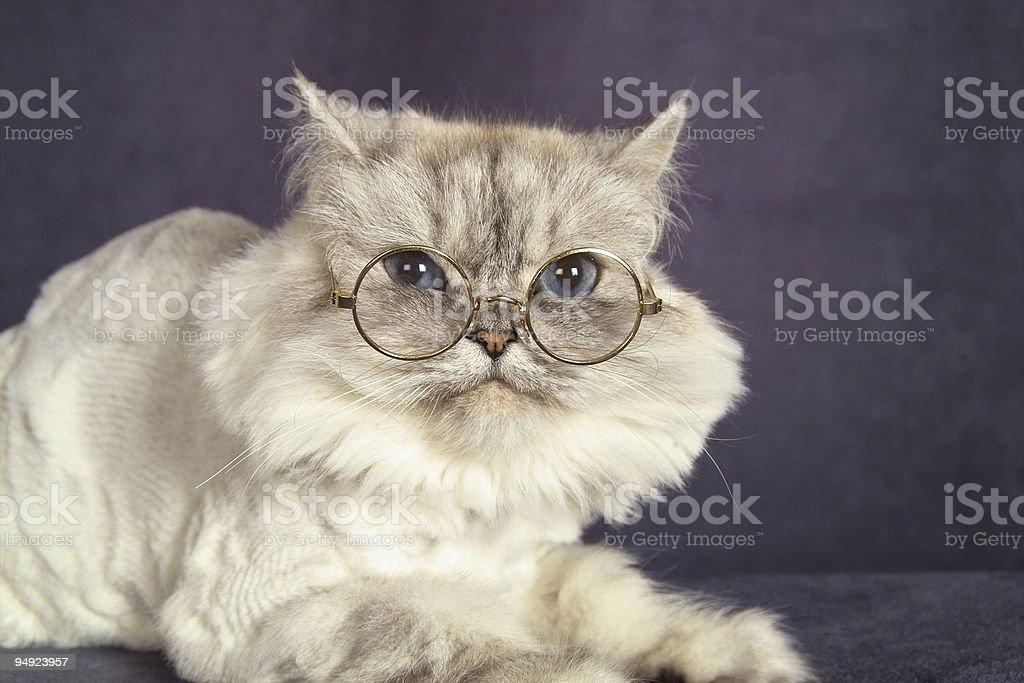 Cat in Glasses stock photo