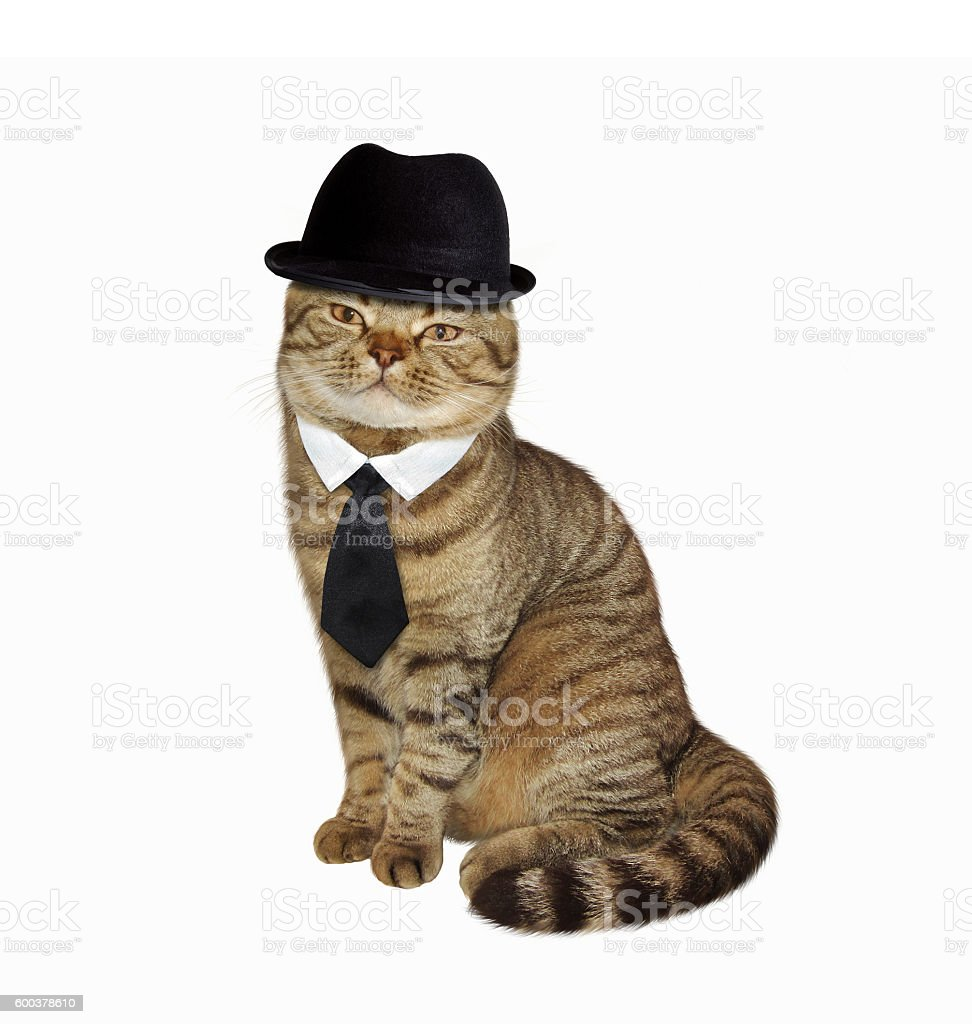 Cat in hat and tie stock photo