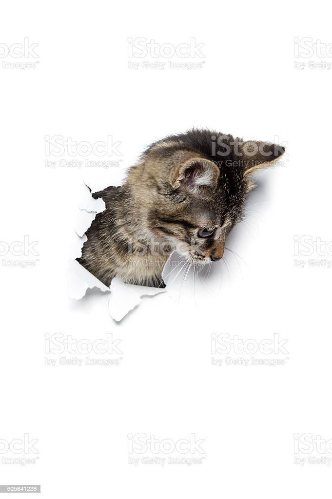 Cat in hole of paper stock photo