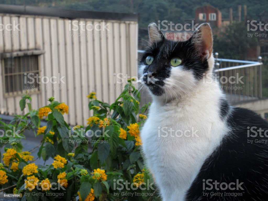Cat in Houtong Cat Village stock photo
