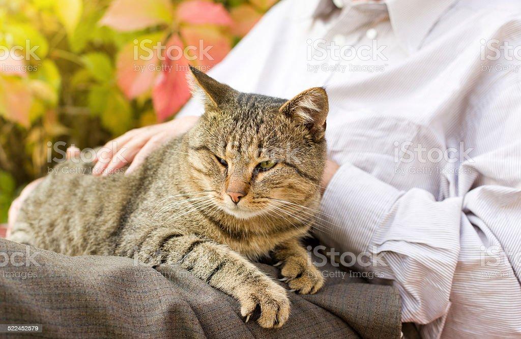 Cat in lap stock photo