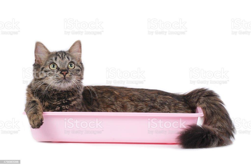 Cat in litter box stock photo