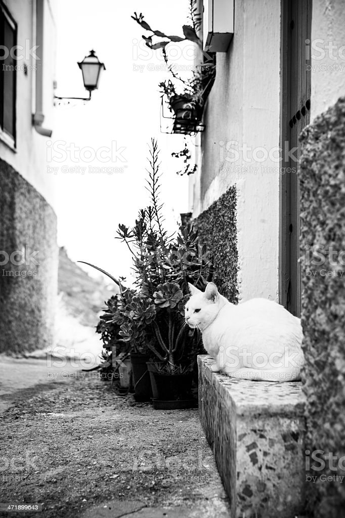 Cat in Mojacar village. Andalusia, Spain. royalty-free stock photo