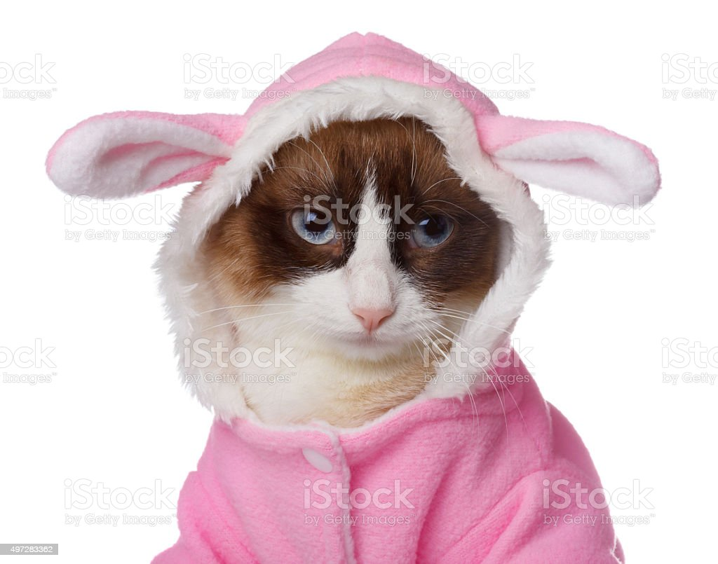 Cat in pink rabbit costume isolated stock photo