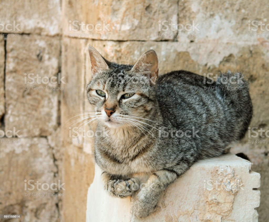 Cat in Rethymno Fortress stock photo