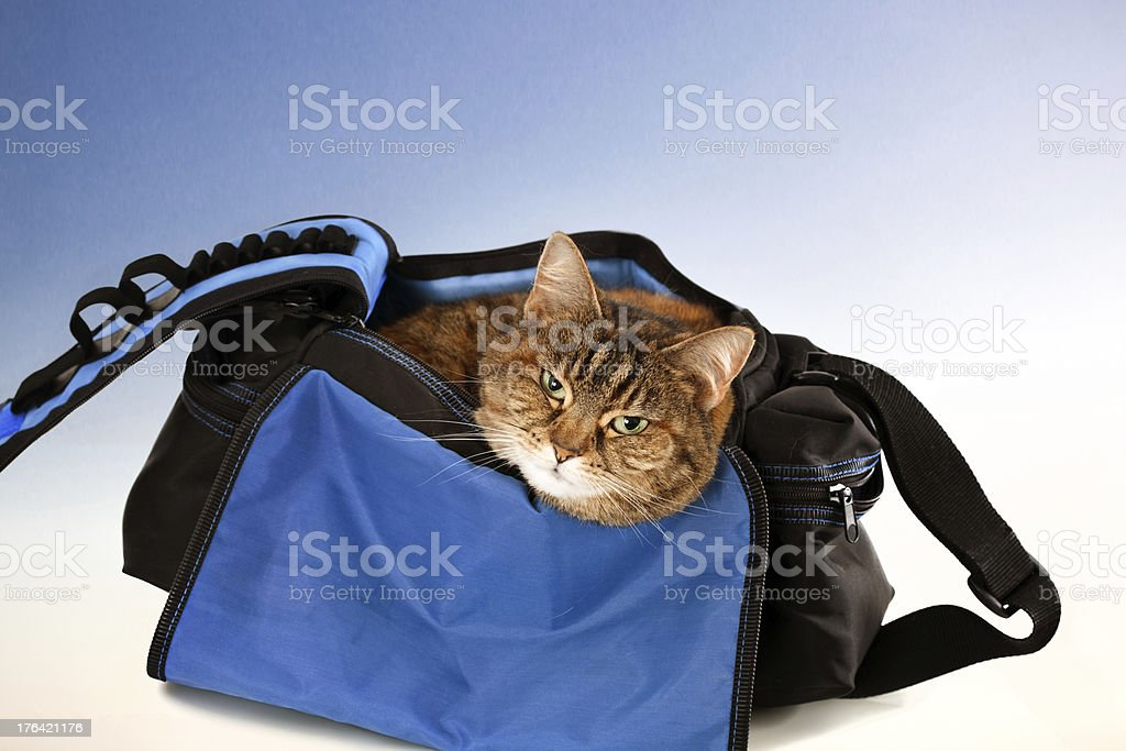 Cat in the bag stock photo