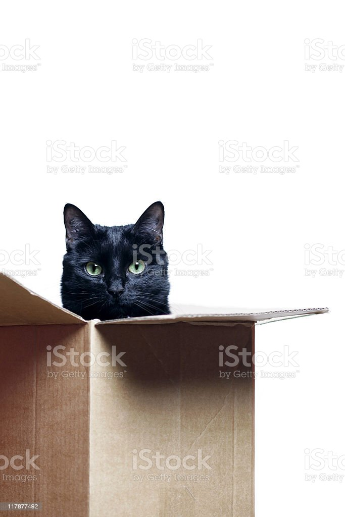 cat in the box royalty-free stock photo