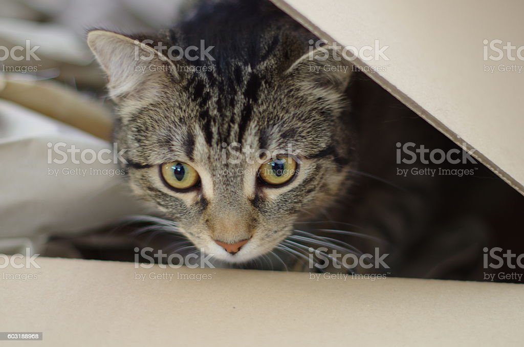 cat in the box stock photo