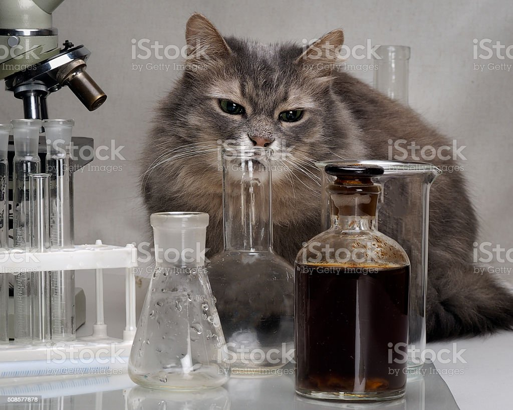 Cat in the chemical laboratory stock photo