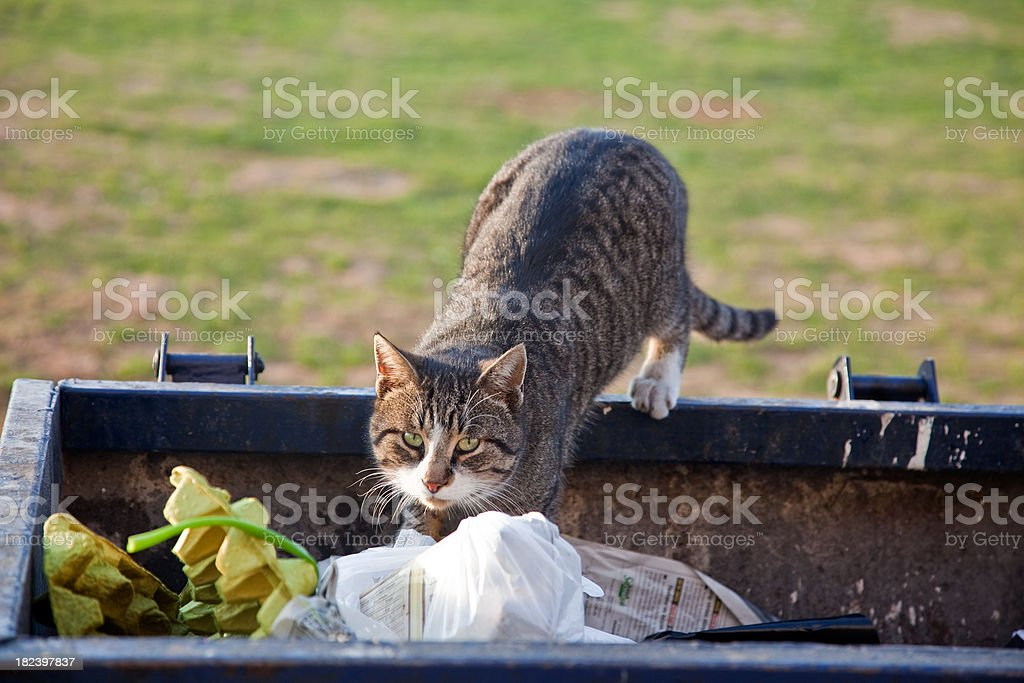 cat in the Dumpster royalty-free stock photo