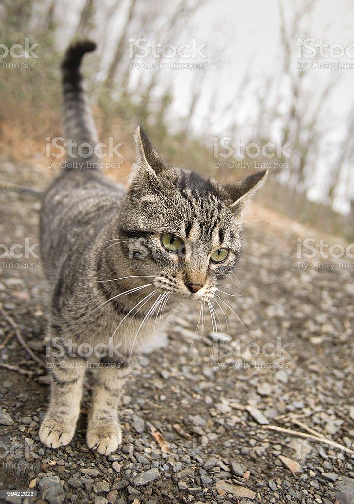 Cat en el bosque - foto de stock