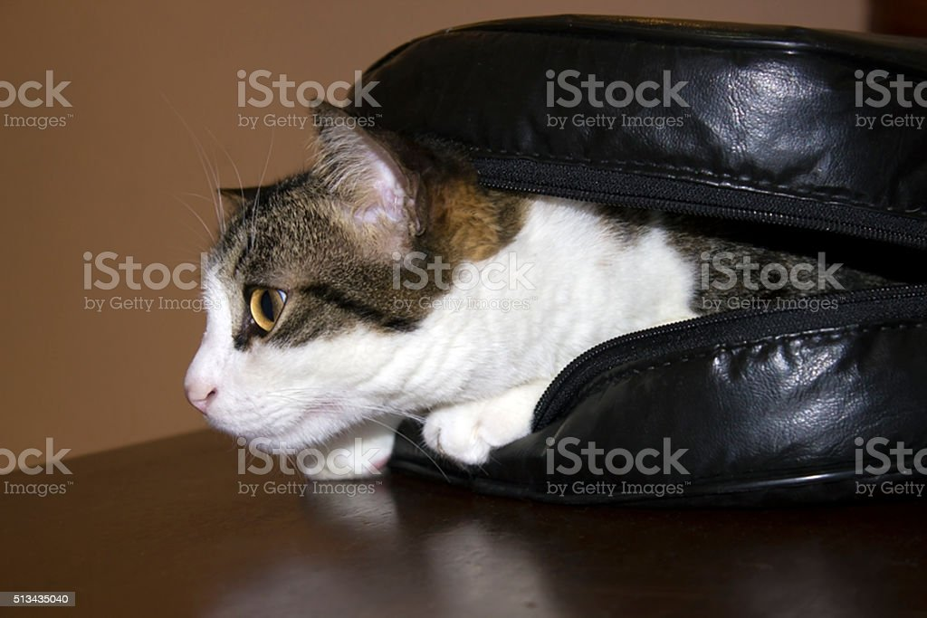 Cat in the guitar case, fun, relaxed stock photo