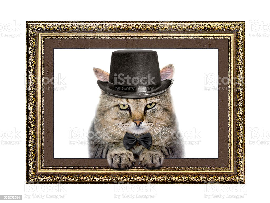 Cat in the hat and bow tie stock photo