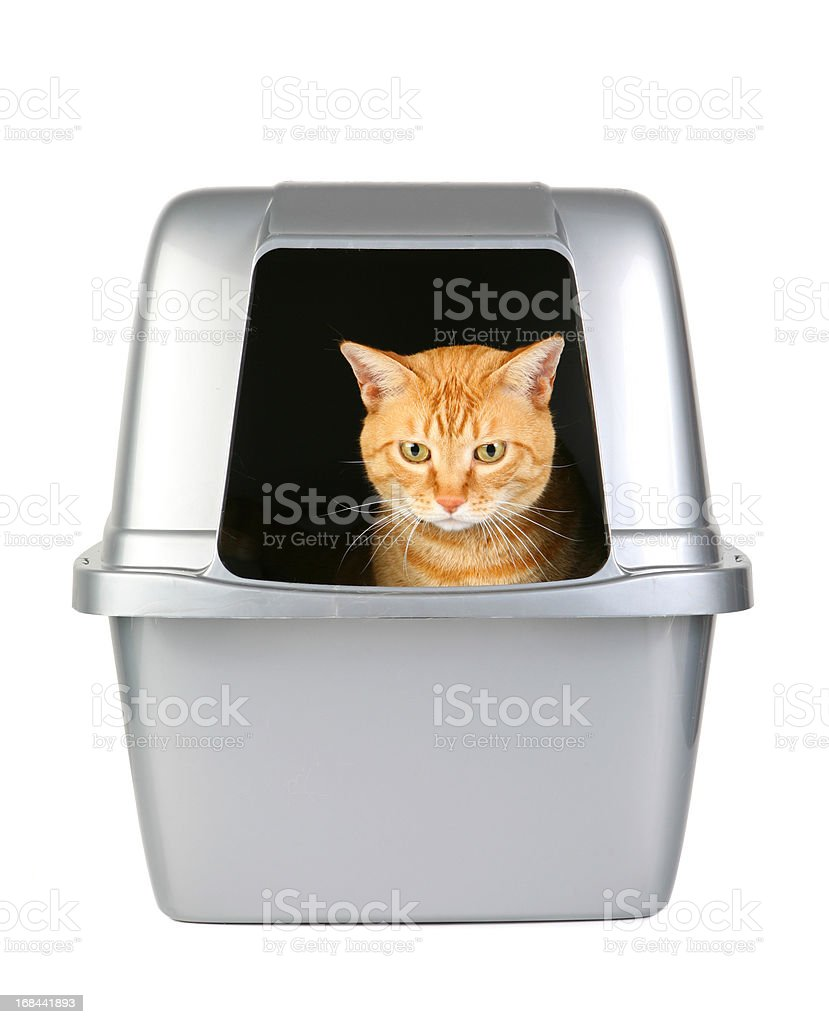 Cat in the Litter Box stock photo