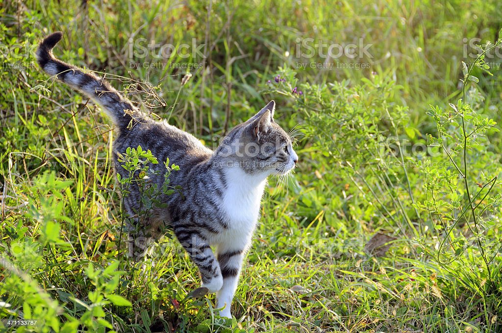 Cat in the nature royalty-free stock photo