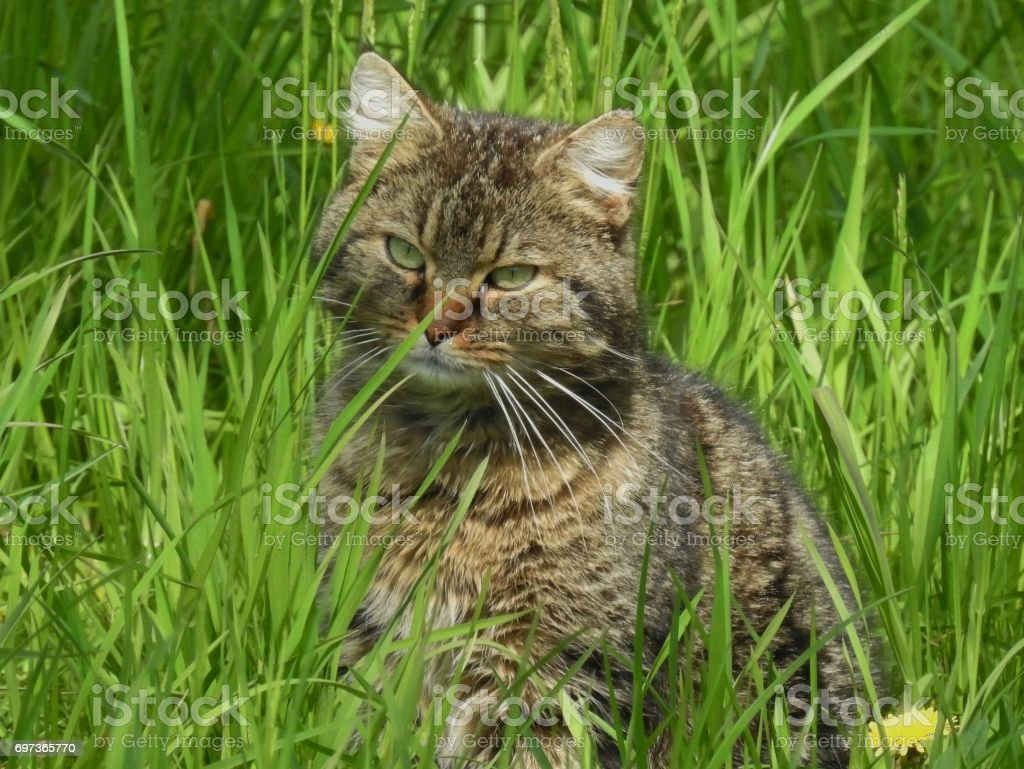 Cat in the nature stock photo