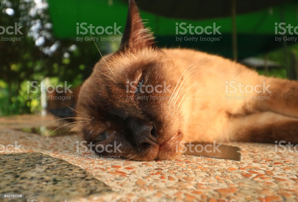 Cat in the park stock photo