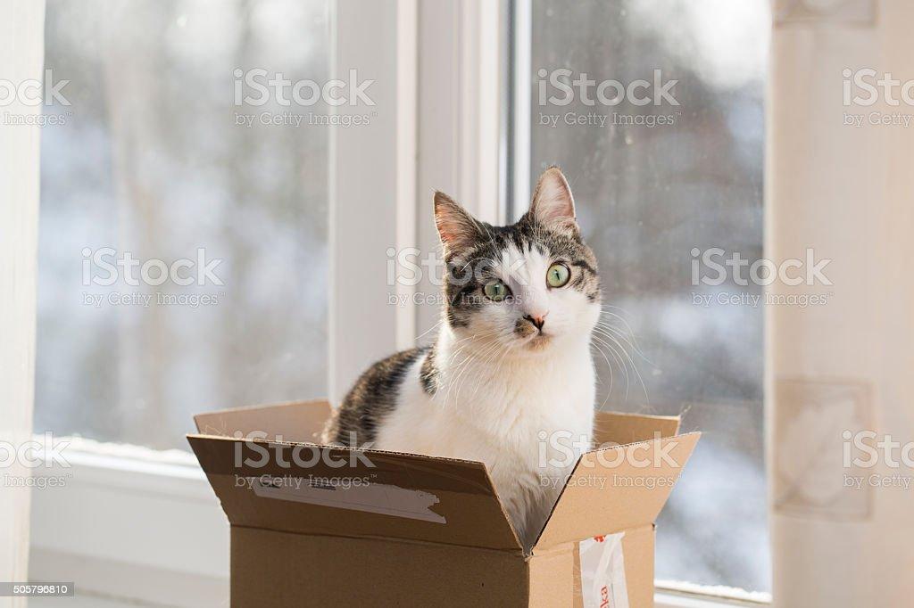 cat in the postal box stock photo