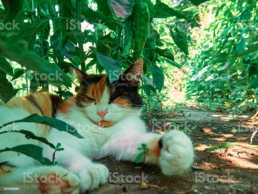 Cat in the shadows royalty-free stock photo