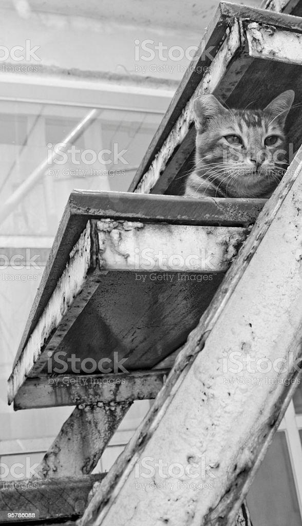 Cat en los pasos foto de stock libre de derechos
