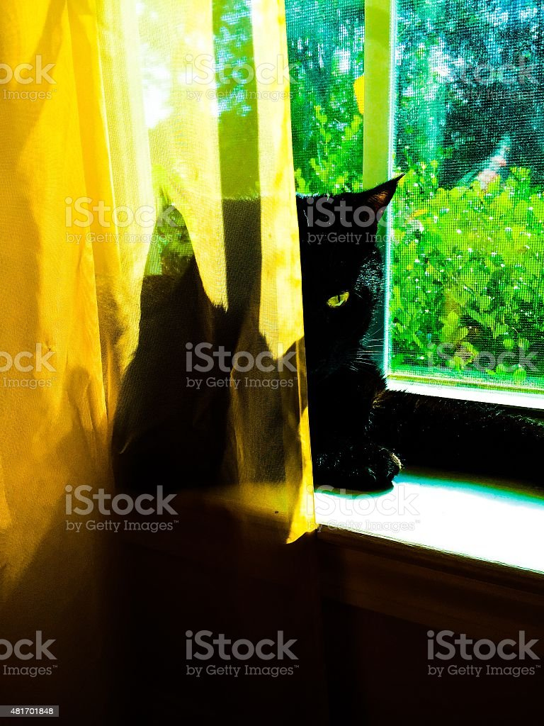 Cat in the Window stock photo