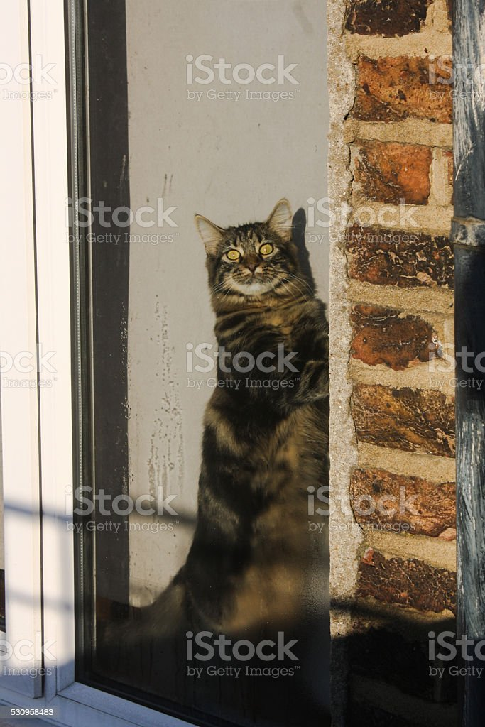 Cat in the window. stock photo