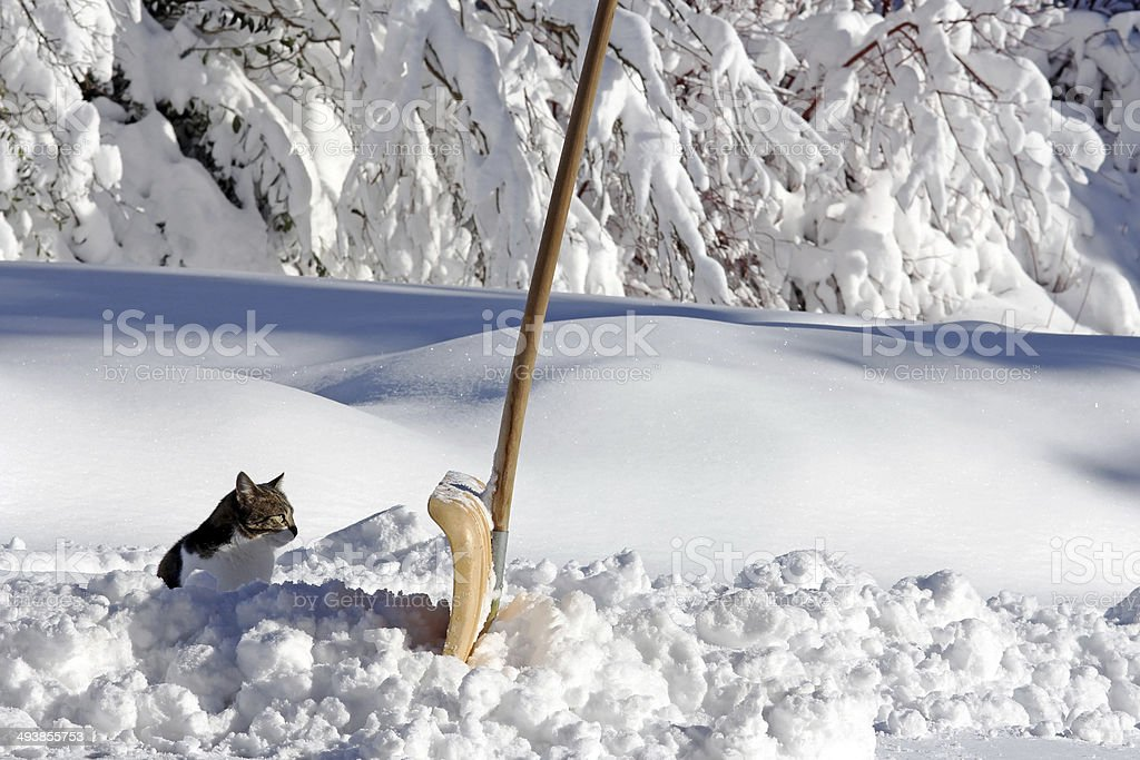 cat in the winter stock photo