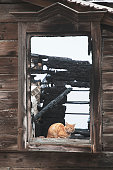 Cat in  window of  wooden house, which is after  fire