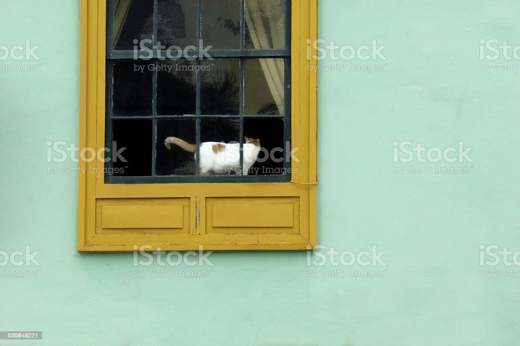 Cat in Window stock photo