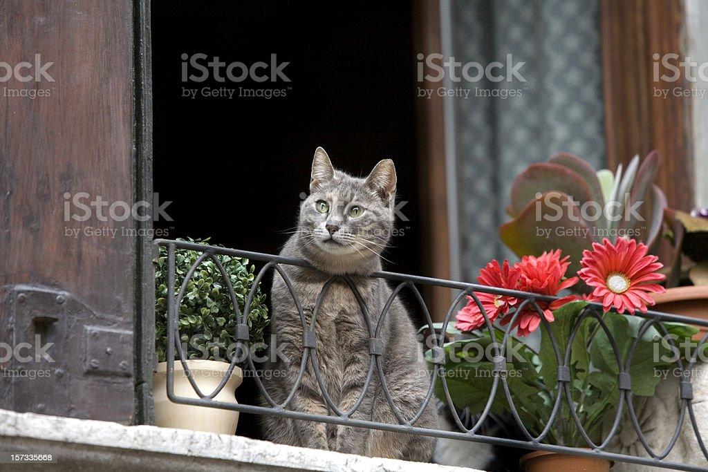 Cat in Window Venice Italy royalty-free stock photo