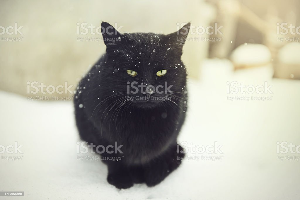 cat in winter stock photo