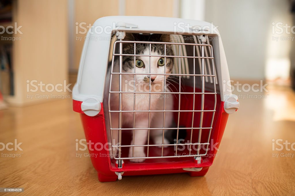 cat inside a cat carrier box stock photo