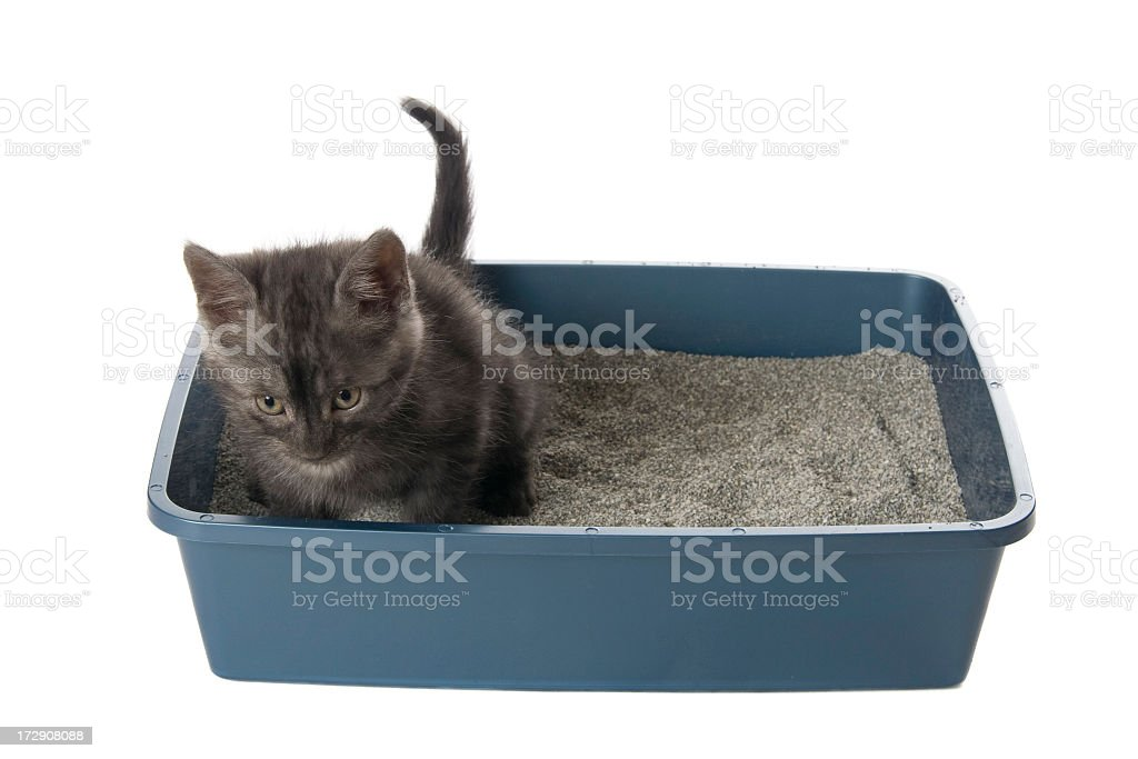 A cat inside the litter box isolated in white stock photo