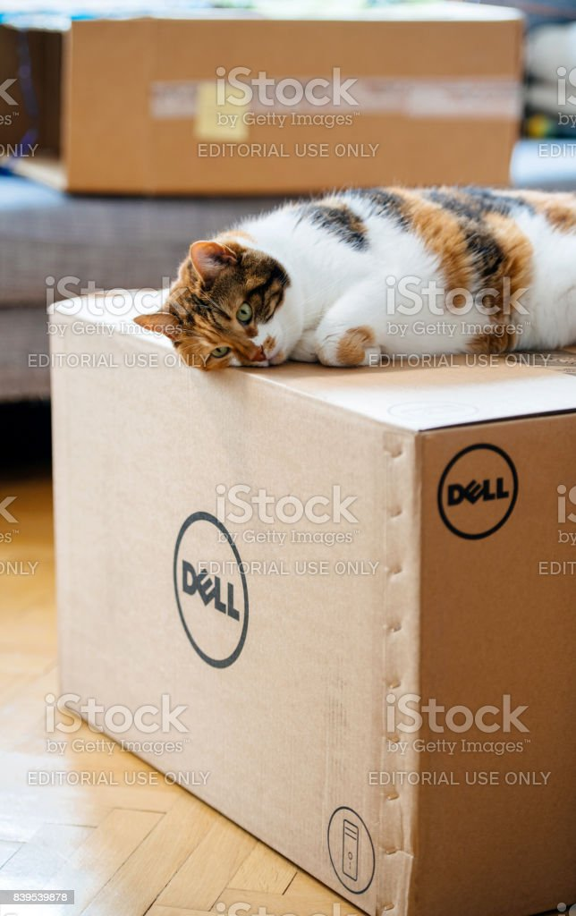 Cat inspecting multiple Amazon Prime boxes delivered by courier and...