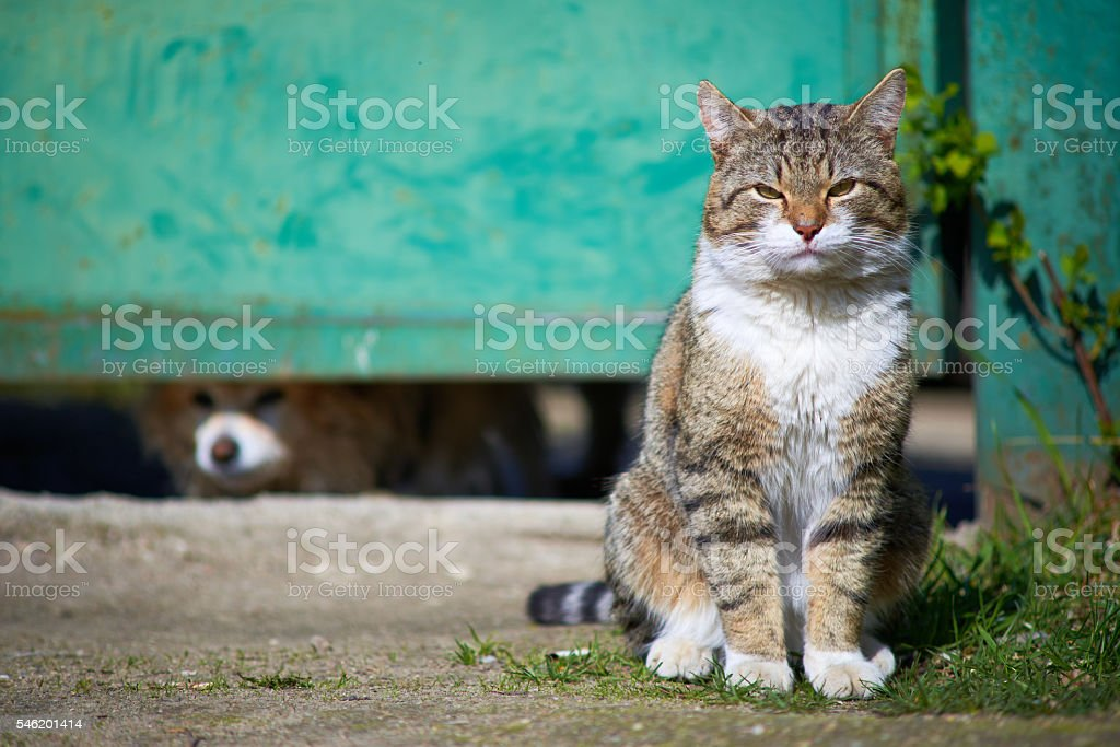 Cat is looking forward with dog background stock photo