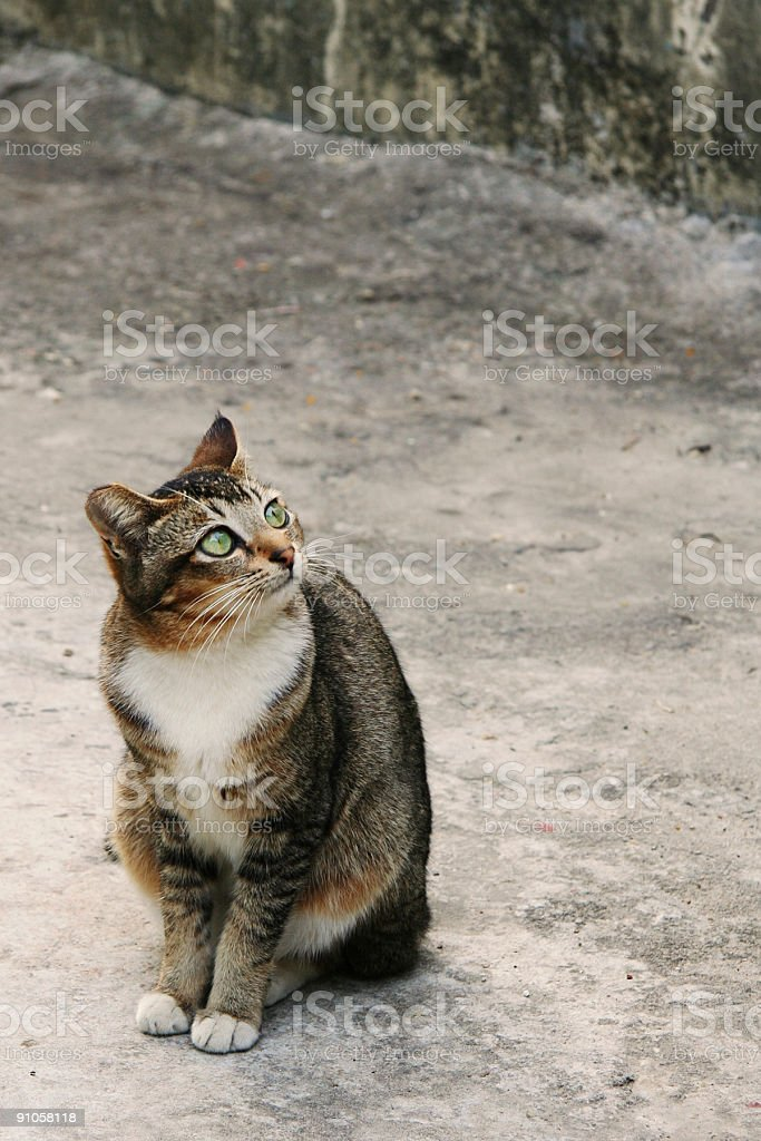 Cat está mirando hacia arriba foto de stock libre de derechos