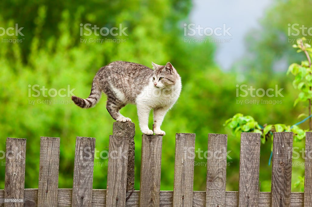 Cat is on a fence. stock photo