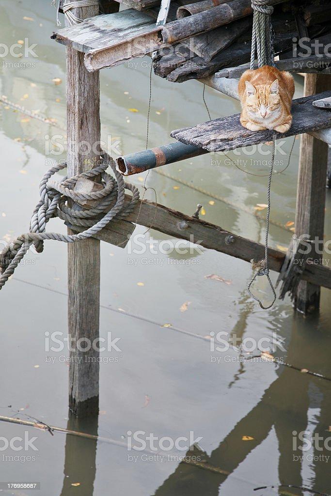 Cat es descansar sobre un río foto de stock libre de derechos