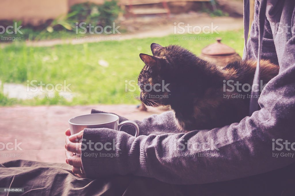 Cat Is Resting stock photo