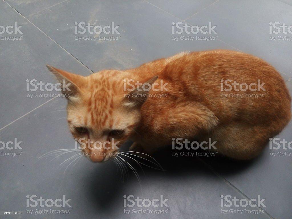 Cat Is Sick stock photo