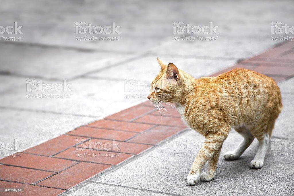 Cat está empezando a pie foto de stock libre de derechos