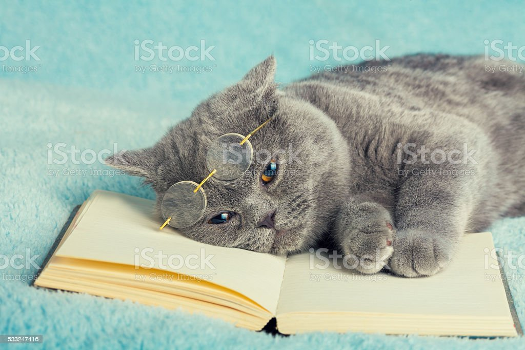Cat is wearing glasses lying on the book stock photo