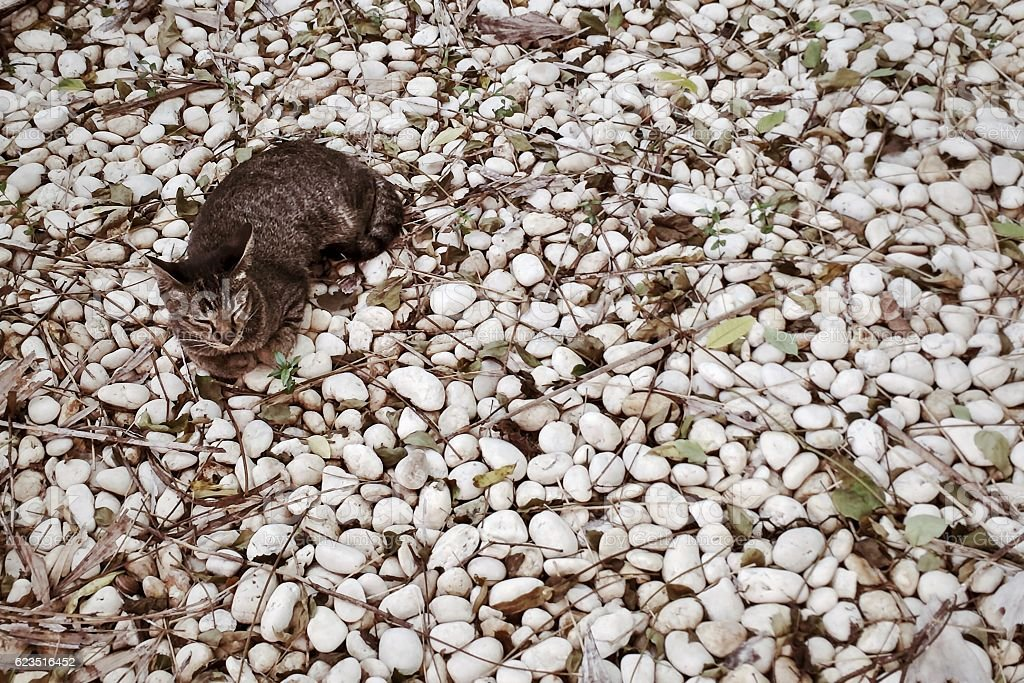 Cat isolated on rock background royalty-free stock photo