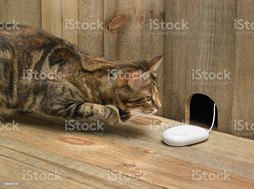 Cat jumping at computer mouse in mouse hole stock photo