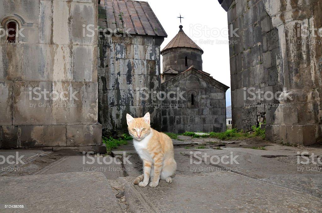 cat keeper of Holy Monastery Haghpat in Armenia stock photo