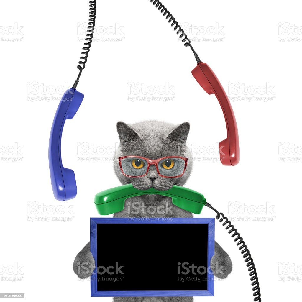 cat keeps frame and phone in its mouth stock photo